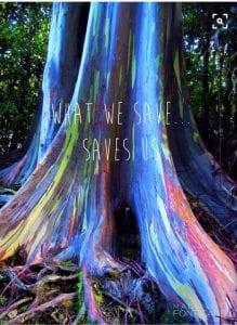 saves us