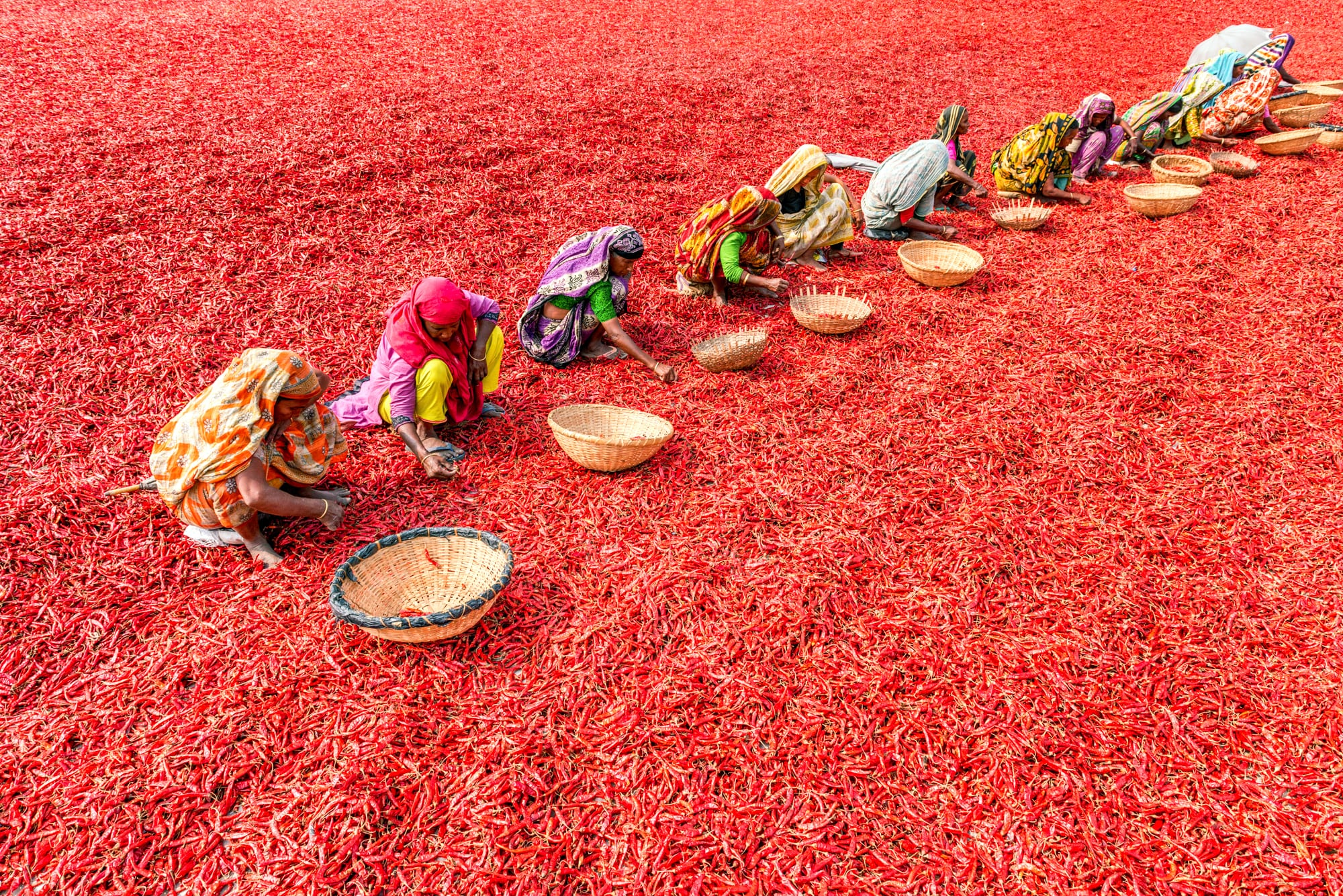 Bangladesh Women Climate Change Chili Peppers