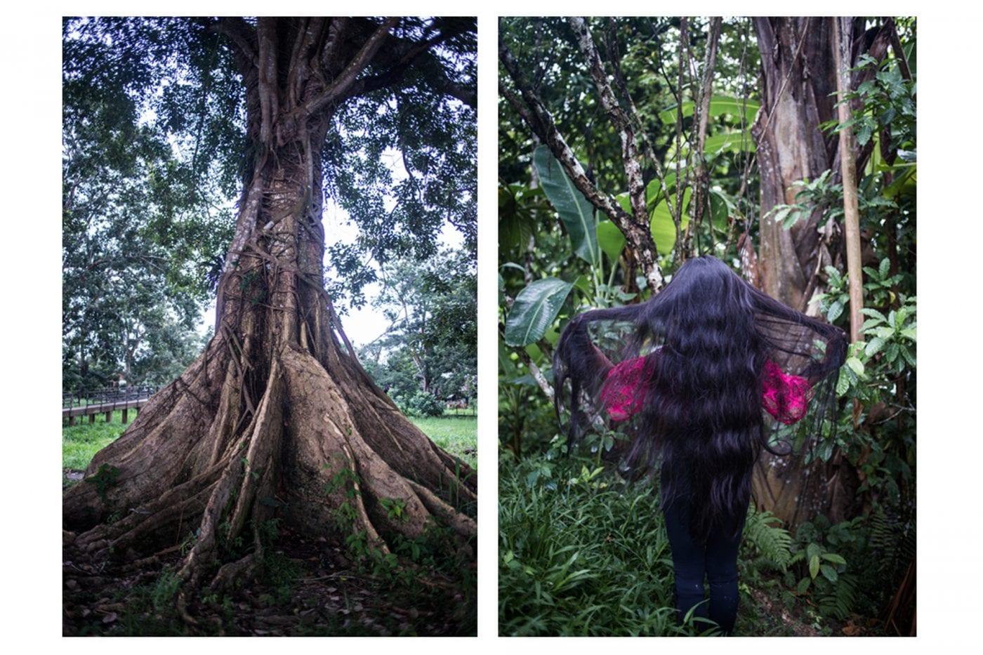 Dragon Tree Peru Plantmedicine