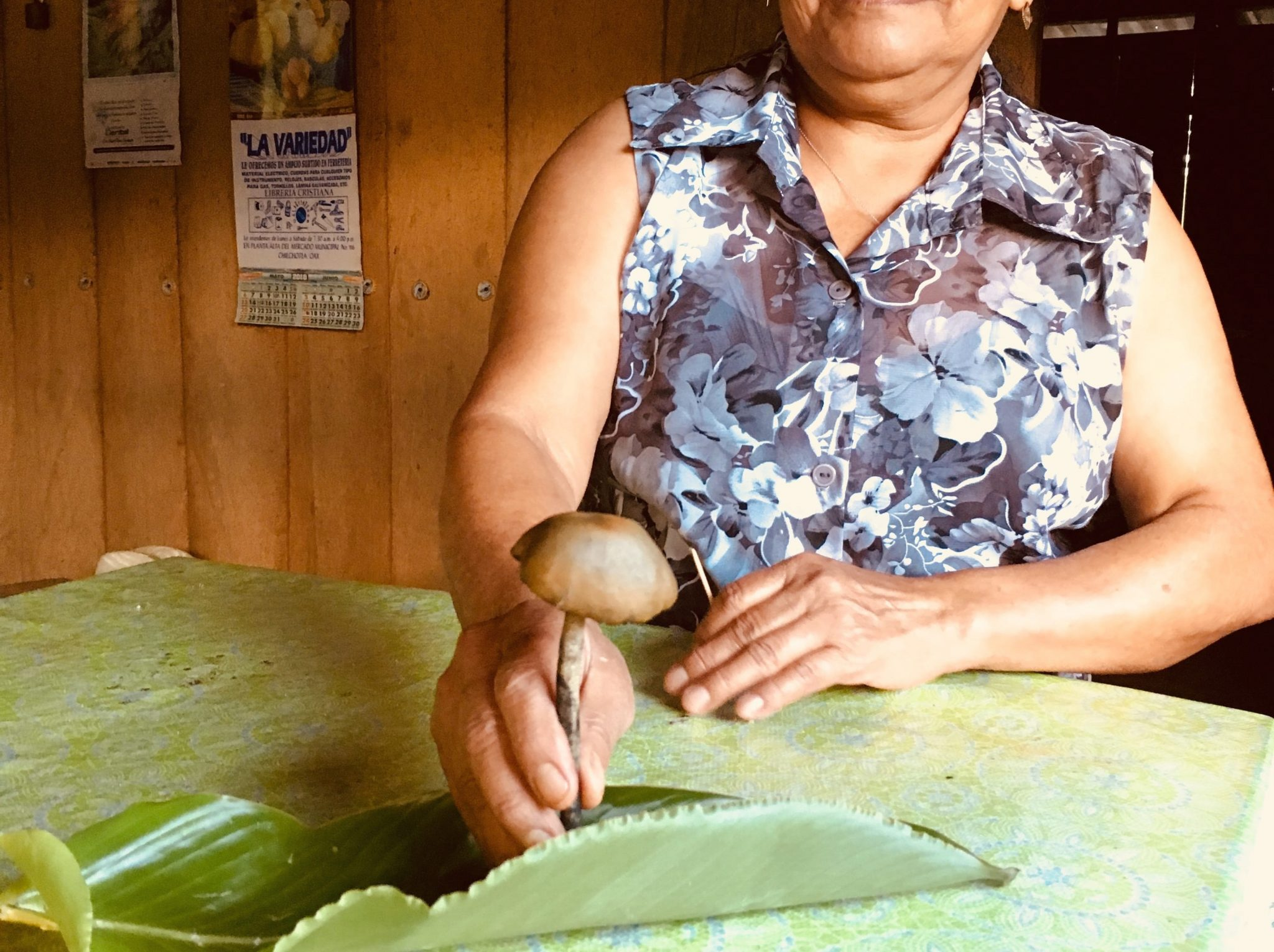Desheto Mushroom Mazateca Mexico