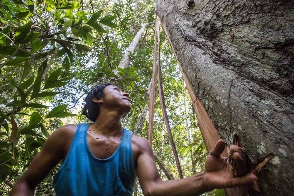Cacao Madre de Dios Peru Amazon