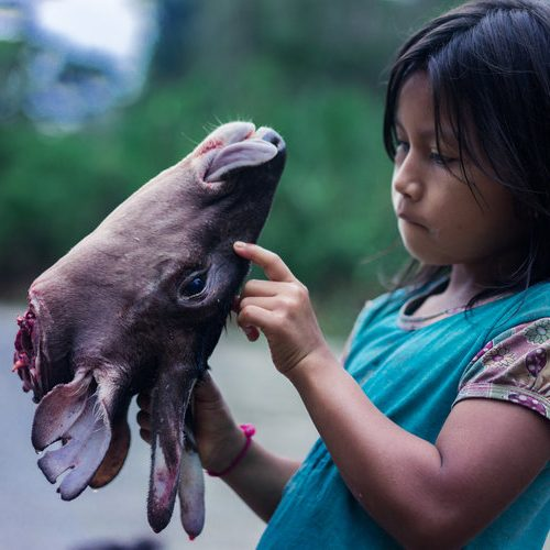sarayaku ecuador indigenous kichwa